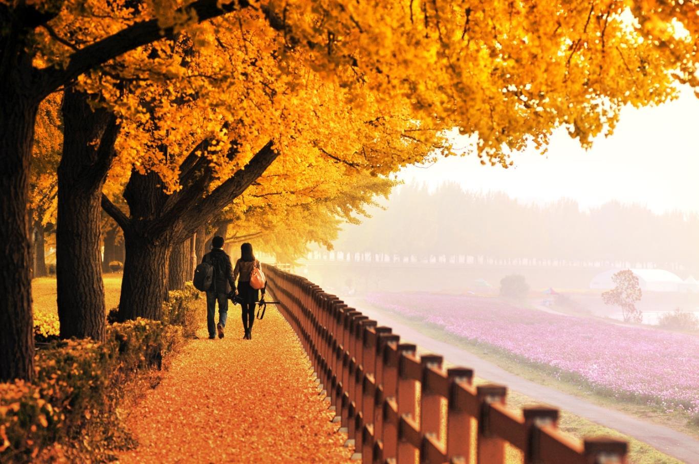 Đẹp điên đảo với mùa thu Hàn Quốc